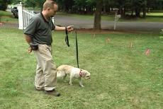 teaching your pet to respect the underground dog fence