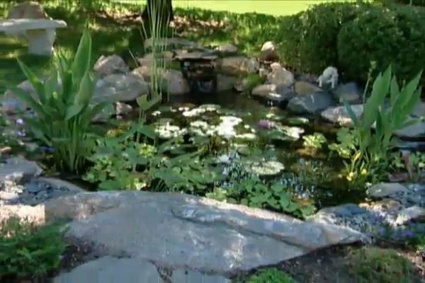 How to put a fish pond in your backyard diy projects for What fish should i put in my pond