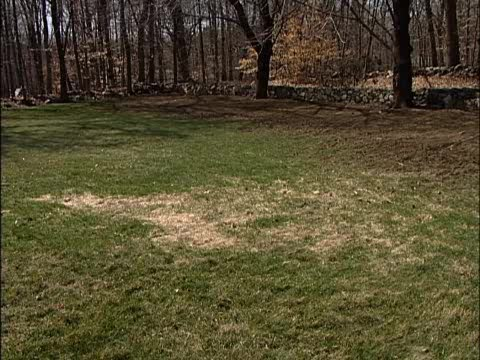 How to Over-seed Bare Spots in a Lawn